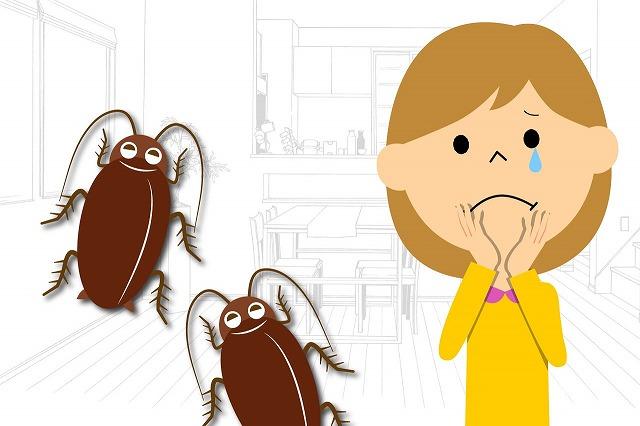 ゴキブリ 防虫・生活衛生 アレルギー予防 害虫駆除 熊本サクドリー