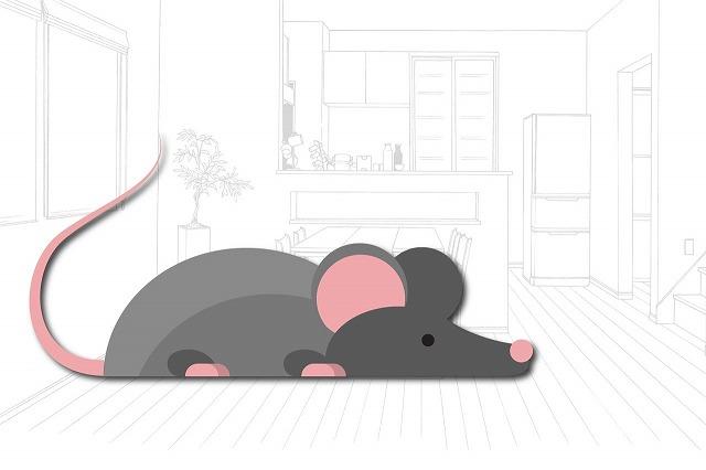 ネズミ 防虫・生活衛生 アレルギー予防 害虫駆除 熊本サクドリー
